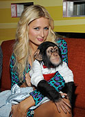 home raised baby chimpanzee for new homes.